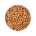 Crisp Brown malt / barna maláta 120 EBC maláta 0,1 kg